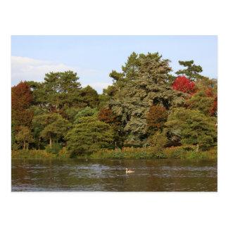 Autumn, Roath Park Lake, Cardiff Postcard