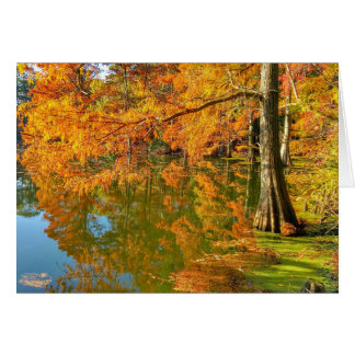 Autumn Scenes - Cypress Swamp Card