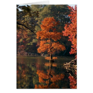 Autumn Scenes - Cypress Tree Card