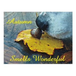 Autumn Smells Wonderful Dog Sniffing Acorn Postcard