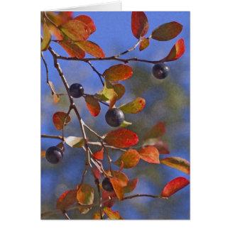Autumn Sparkleberry Card
