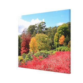 Autumn splendour, Adelaide Hills, Australia Canvas Print