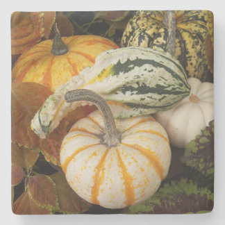 Autumn Squash Photo Stone Coaster