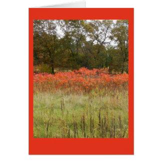 Autumn Sumac Blank Notecard