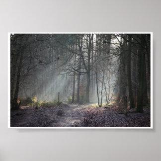 Autumn sun rays streak through woodland poster