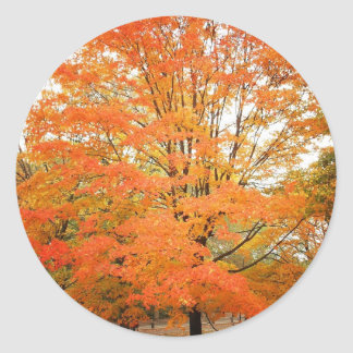 Autumn Tree in Central Park, New York City Classic Round Sticker