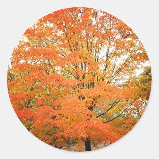 Autumn Tree in Central Park, New York City Round Sticker