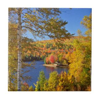 Autumn tree landscape, Maine Tile