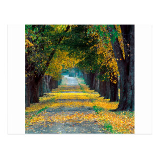 Autumn Tree Lined Roadway Louisville Kentucky Postcard