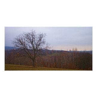 Autumn Tree Photo Card