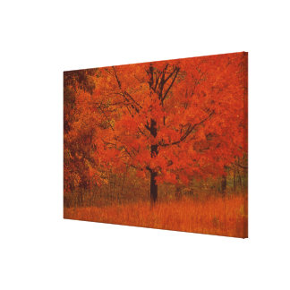 Autumn tree with red foliage canvas print