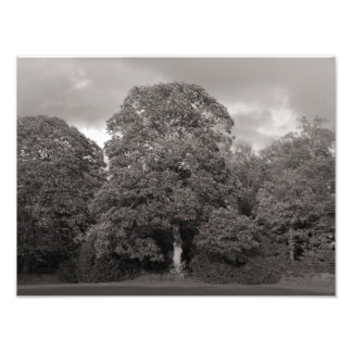 Autumn Trees, Bute Park, Cardiff Photo Print