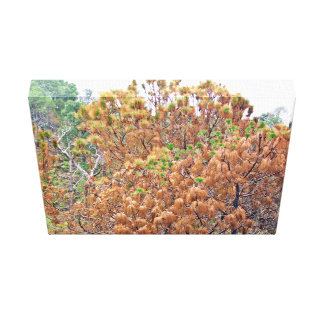 Autumn Trees Gallery Wrapped Canvas