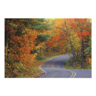 Autumn trees line roadway in Itasca State Park Photo