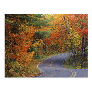 Autumn trees line roadway in Itasca State Park Postcard