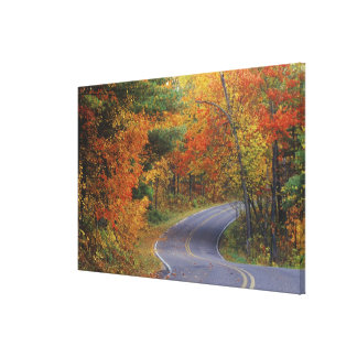Autumn trees line roadway in Itasca State Park Stretched Canvas Print