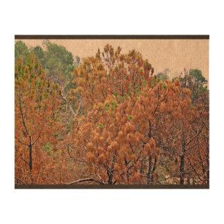 Autumn Trees Queork Photo Prints