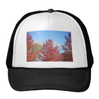 Autumn trees trucker hat