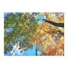 Autumn Treetops Lg Canvas Print