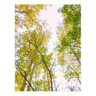 Autumn Turning Postcard