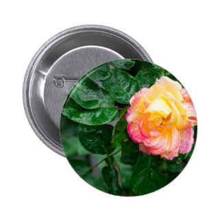 Autumn withered rose with raindrops 2 inch round button