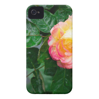 Autumn withered rose with raindrops Case-Mate iPhone 4 cases