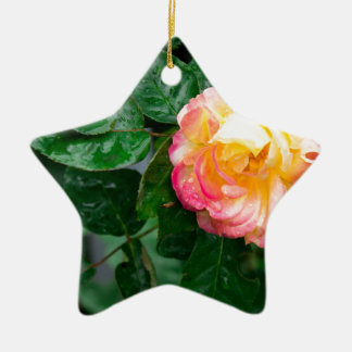 Autumn withered rose with raindrops ceramic star ornament