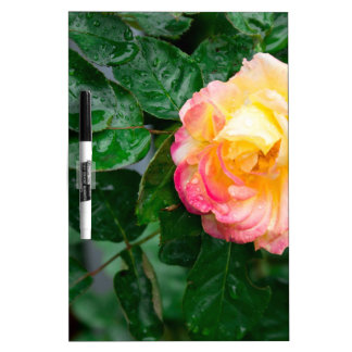 Autumn withered rose with raindrops Dry-Erase boards