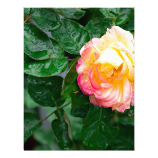 Autumn withered rose with raindrops letterhead template
