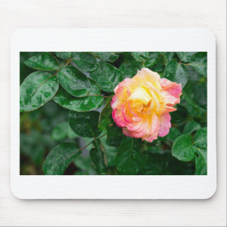 Autumn withered rose with raindrops mouse pad