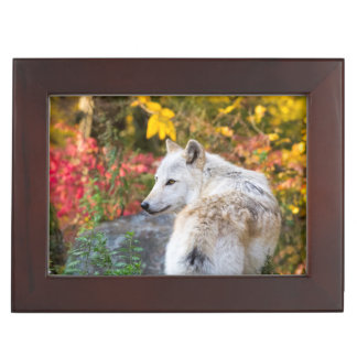 Autumn Wolf Keepsake Box