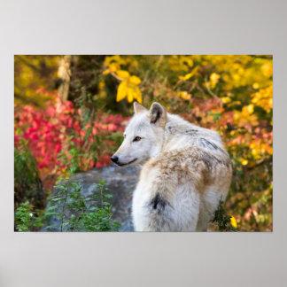 Autumn Wolf Poster