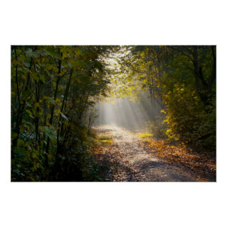 Autumn Woodland Path with Sunrays Poster