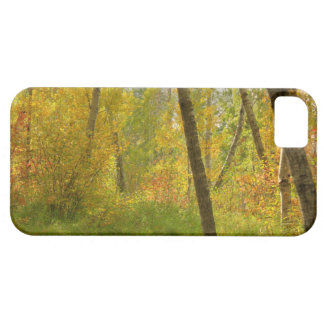 Autumn Woodlands Case For The iPhone 5