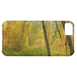 Autumn Woodlands iPhone 5C Case