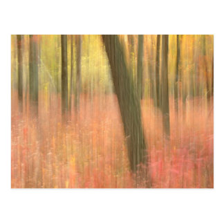 autumnal scenic abstract postcard