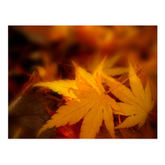 Autumnal serenity. postcard