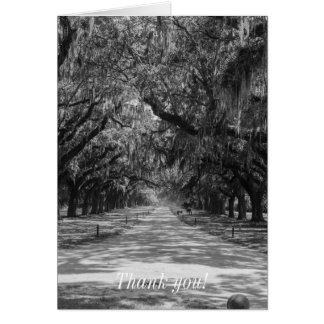 Avenue Of Oaks Grayscale Card