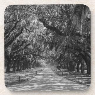 Avenue Of Oaks Grayscale Coaster
