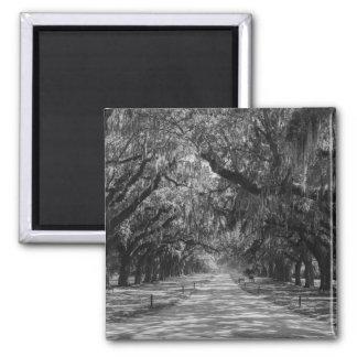 Avenue Of Oaks Grayscale Magnet