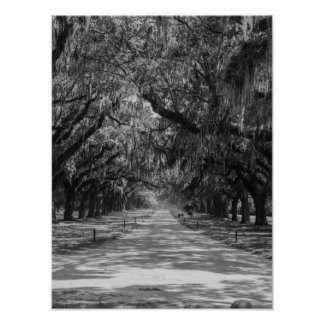 Avenue Of Oaks Grayscale Poster