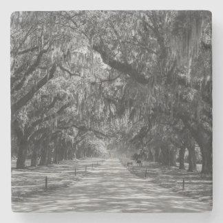 Avenue Of Oaks Grayscale Stone Coaster