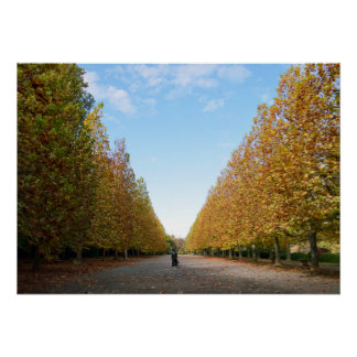 Avenue of Plane Trees in Autumn Poster