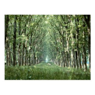 Avenue of Plane Trees, park of Chateau, Versailles Postcard