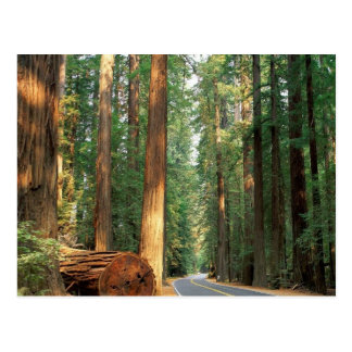 Avenue of The Giants, Humboldt, CA Postcard