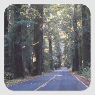Avenue of the Giants- Humboldt Redwoods State Park Square Sticker
