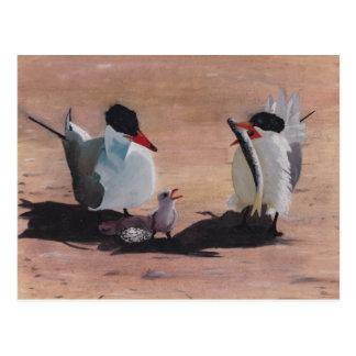 Avian Family Feeding Time Postcard