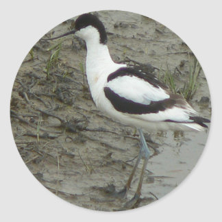Avocet Stands In Front Of Muddy Background Classic Round Sticker