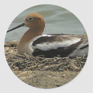 Avocet With Long Nose And Red Head Bedded In Nest Classic Round Sticker