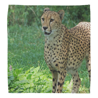 Awesome cheetah bandana